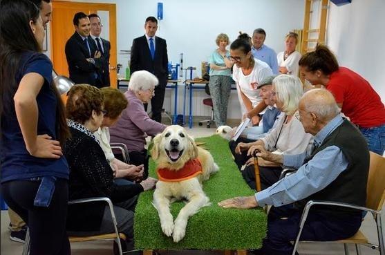 terapia con animales copia - Éxito de las terapias con perros en el Centro de Día de Jávea